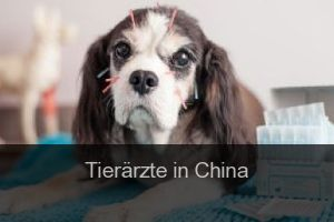 Tierärzte in China